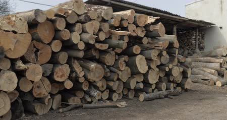 сложены : Timber logging. Freshly cut tree wooden logs piled up. Wood storage for industry.