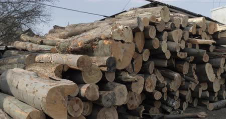 折り畳む : Timber logging. Freshly cut tree wooden logs piled up. Wood storage for industry.