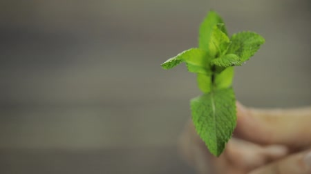 fodormenta : Fresh mint in hand on wooden background.