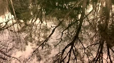 Trees retro images reflected in a pond Wideo