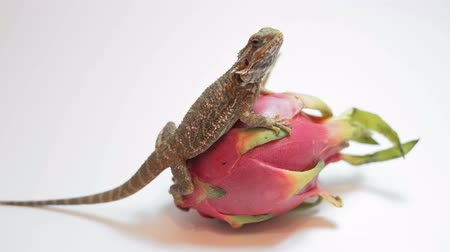 pogona : Dragon fruit (Pitaya) on a white background.