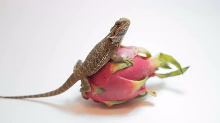 reptile : Dragon fruit (Pitaya) on a white background.