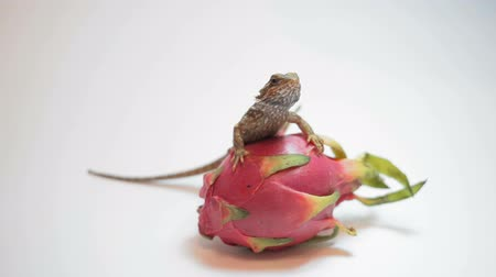 игуана : Dragon fruit (Pitaya) on a white background.