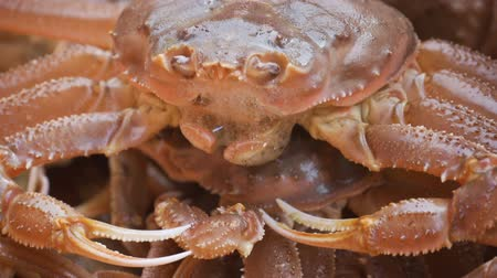istiridye : Several large pink crabs are sitting in a tank at the fish market.
