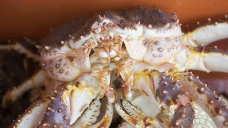 shellfish : Several large pink crabs are sitting in a tank at the fish market.