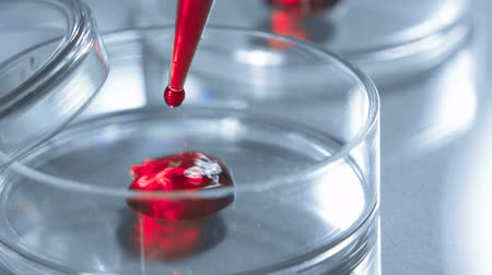 bacteriological : Close up of a petri dish and a pipette A scientist adds blood or red liquid to a petri dish. Concept - laboratory tests, research, blood test Stock Footage
