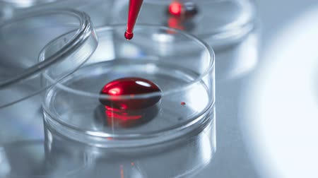 antimicrobial : Close up of a petri dish and a pipette A scientist adds blood or red liquid to a petri dish. Concept - laboratory tests, research, blood test Stock Footage