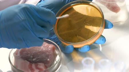 preservação : A scientist in the laboratory conducts a microbiological analysis of meat.