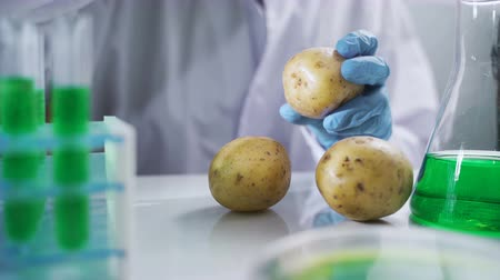 antimicrobial : Bio scientist in gloves injects green solution or substance in genetically modified potatoes in the laboratory