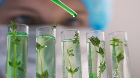 essencial : Scientific Experiment - Flowers and plants in test tubes Stock Footage
