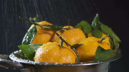 açucarado : Washing orange tangerines with water drops on black background, slow motion