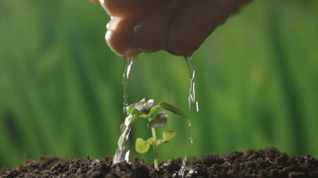 seeding : Plant seedling. Hand watering young baby plants growing