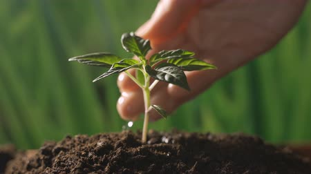 plantio : Seedling,female hand watering young plant over green background,seed planting