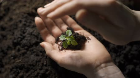 salva vidas : Girl holding young green plant in hands. Macro close up of hands holding small green plant.