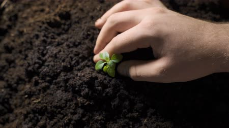 agronomist : Hand putting small plant to soil with care Stock Footage