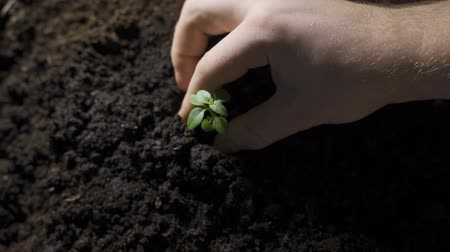 Planting young tree by kid hand on back soil as care and save wold concept Стоковые видеозаписи