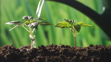 Plant growing on soil with hand watering over sunlight and green background Stock Footage