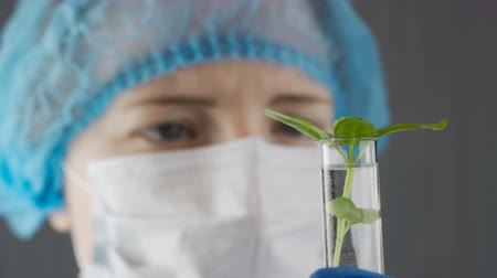 Researcher examining green sprouts Stock Footage