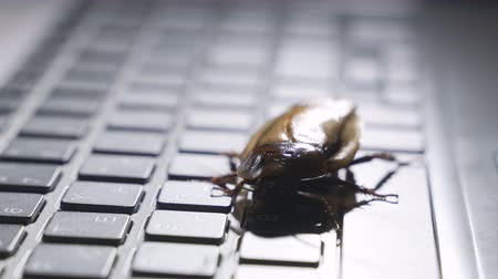 mantis : Software bug metaphor, cockroach walks on a laptop keyboard, macro photo with selective focus Stock Footage