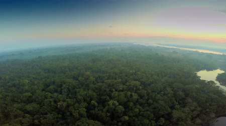 şaşırtıcı : Aerial Shot Of Amazon Rainforest during Twilight