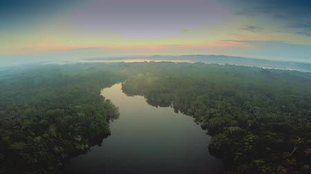 Aerial Shot Of Amazon Rainforest during Twilight