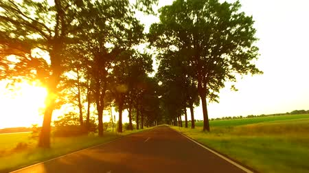 Driving A Car Along A Sunny Alley Landscape with an alley of trees, fields and light traffic. Sunlight with lens flare. Travel and transportation concepts. A gyro-stabilized camera was mounted on the hood of the car. Stock mozgókép