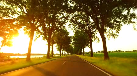 Driving A Car Along A Sunny Alley Landscape with an alley of trees, fields and light traffic. Sunlight with lens flare. Travel and transportation concepts. A gyro-stabilized camera was mounted on the hood of the car. Vídeos