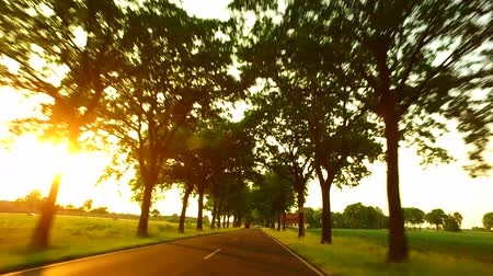 Driving A Car Along A Sunny Alley Landscape with an alley of trees, fields and light traffic. Sunlight with lens flare. Travel and transportation concepts. A gyro-stabilized camera was mounted on the hood of the car. Stock Footage