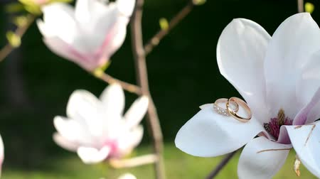gold wedding rings for lovers on magnolia flowers Stock mozgókép