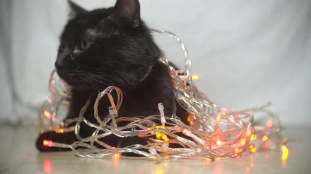 black cat with a Christmas garland. 4k, slow motion