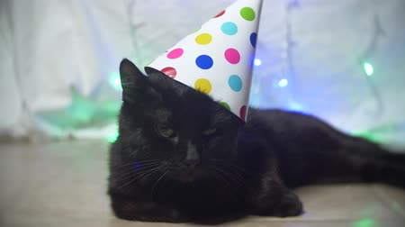 wicked : a sleepy black cat with a garland in a festive cap. 4k. Slow motion Stock Footage
