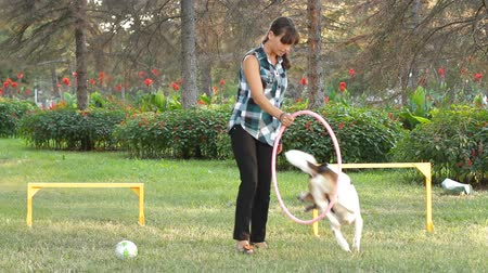 abroncs : Dog  jumping through agility hula hoop Stock mozgókép