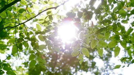 át : The glare of the sun in the leaves of the trees in the park