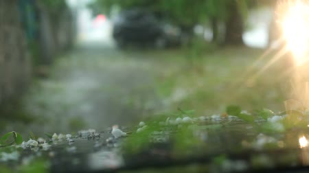 повреждение : Large hailstones fall on the car, on the road flowing streams of water goes cold rain and hail. Motorists trying to hide the cars under tree branches to avoid damage. Стоковые видеозаписи