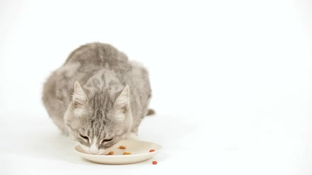 kotě : Kitten having its meal