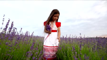 levandule : Happy cute little girl is wearing  white dress with red trim in a lavender field picks purple flowers