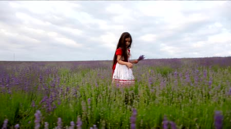levandule : Little girl on the lavender field. Young girl with long hair collects lavender