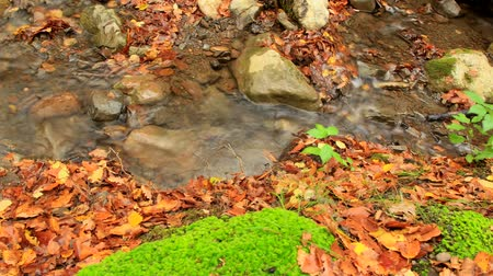 описание : Beautiful autumn forest with fallen leaves and small clean river. Two frames. A moving camera. Slider.