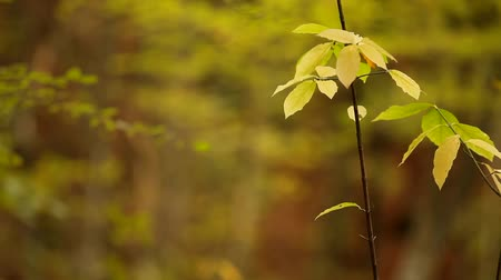 popisný : A thin branch with yellow leaves.
