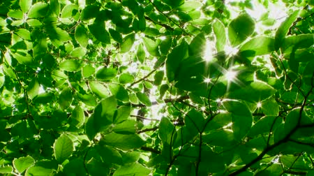 raios de sol : Through the foliage breaks sunlight.