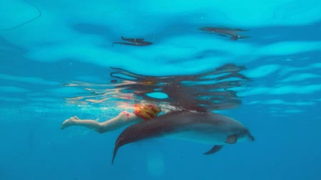 yunus : Happy child and dolphin in blue water.