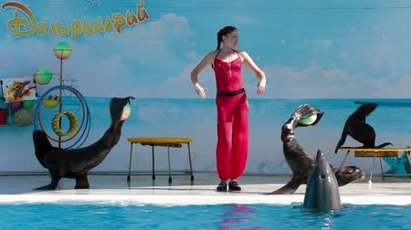 yunus : This is a shot captured at Crimean dolphinarium - three seals holding balls in their tails and dancing together with their trainer and one dolphin swimming in water. Stok Video