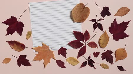 Pencil is rolling on a lined sheet of paper and stopping. Pink background with colorful autumn leaves. Concept of back to school