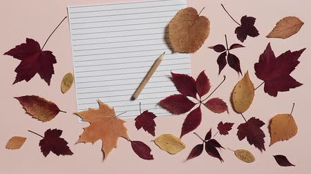 clerical : Empty sheet of paper with pencil and colorful autumn leaves on pink background. Wind blows away the leaves. Concept of back to school Stock Footage