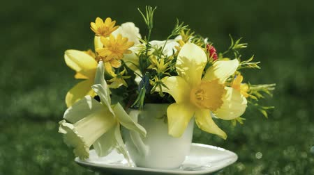 żonkile : yellow narcissus and wild spring flowers bouquet in a coffee cup instead of vase Wideo