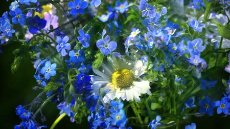 forget : forget me nots and daisies wildflowers bouquet turning up close up