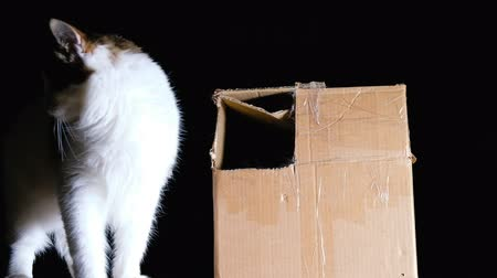 kittens playing : Cats playing in a cardboard box, slow motion.