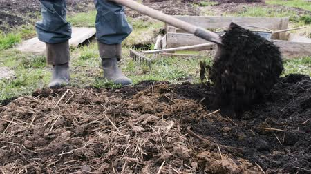 muck : Man mixes the earth with manure, prepares the soil for planting vegetables, 4k.