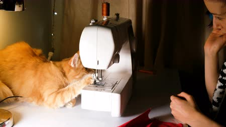 kochanka : Girl is played with a red cat on the sewing table, the cat interferes with sewing, 4k.
