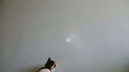 touched : Cat jumps for sunlight flare slow motion